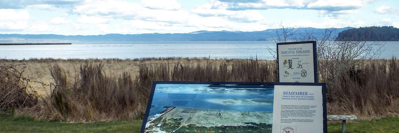 nahcotta coast and nature display