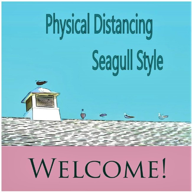 seagull style