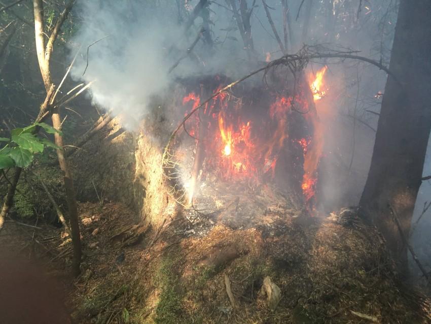 mkarvia fire