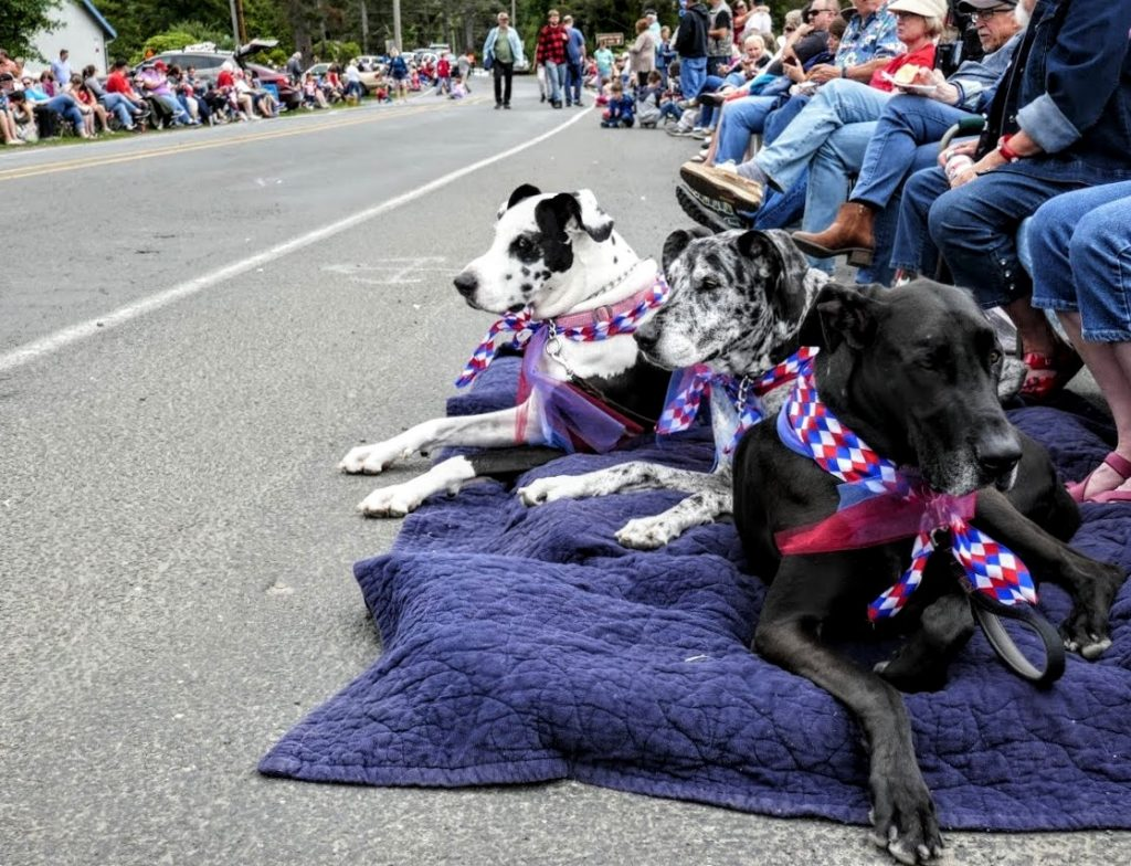 4th of july 2019 trio of dogs